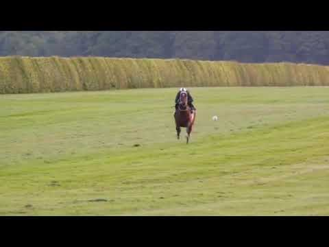 Equus Award winner, Whisky Baron getting into stride at Newmarket, UK