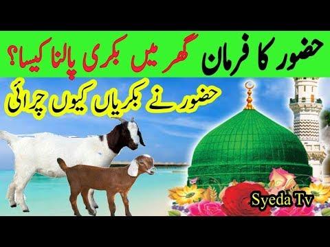 Nabi Pak Ka Farman Ghar Me Bakri Palna Kaisa Hai | Goat In Islam || Dolat | Faide | Prophet Muhammad