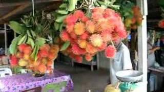 Musim Buah-buahan Rambutan durian Manggis