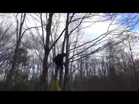 Felling Trees In Front Of My Tiny House To Improve Solar Power Output
