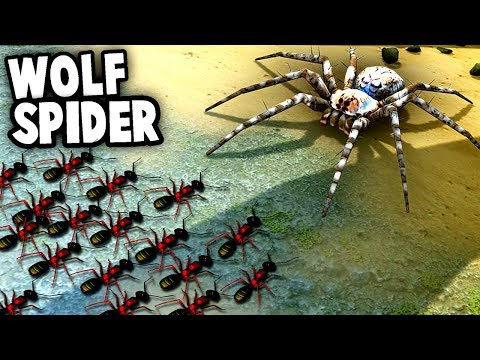 GIANT SPIDER vs Ant Colony! Wolf Spiders vs NEW ANT Species (Empires of the Undergrowth)
