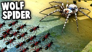 GIANT SPIDER vs Ant Colony!  Wolf Spiders vs NEW ANT Species (Empires of the Undergrowth) thumbnail