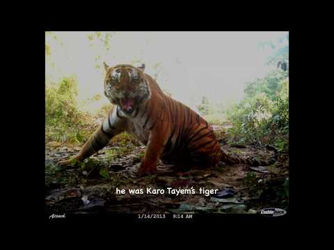 Pakke Tiger Reserve camera trap 2017