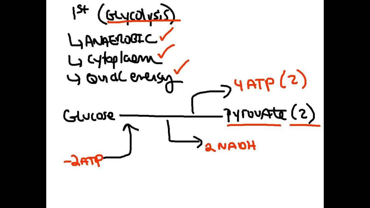 How Apartments Works New: Atp Biology