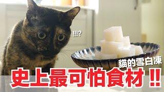 從來沒煮過這個東西-貓的雪白凍-好味貓副食食譜-好味貓鮮食廚房ep148