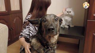 Мои Домашние Животные. Кот Боня и Собака Марта