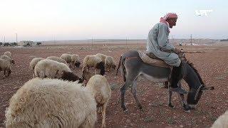 يرعى الأغنام ويحفظ الأشعار..شاهد جزءا من حياة أبو سامح بريف حلب