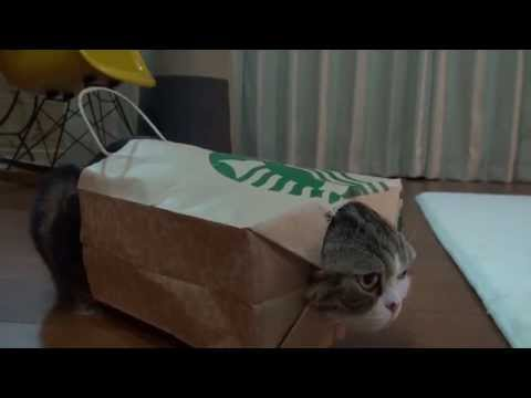 Maru Approves Of Paper Bag Armor