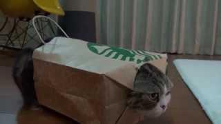 着るねこ2。-Maru wears the paper bag 2.-