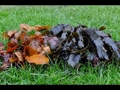 how to create compost from leaves