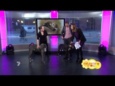 Todd McKenney with greyhounds on The Morning Show