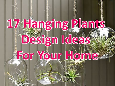 17 Hanging Plants Design Ideas For Your Home - DecoNatic - YouTube