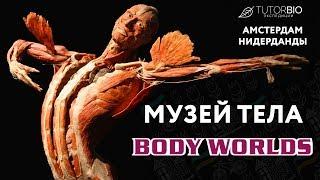 Музей Body Worlds в Амстердаме