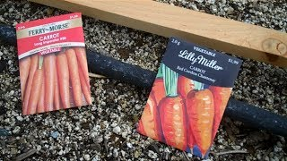 How to's of Planting Carrots from Seed