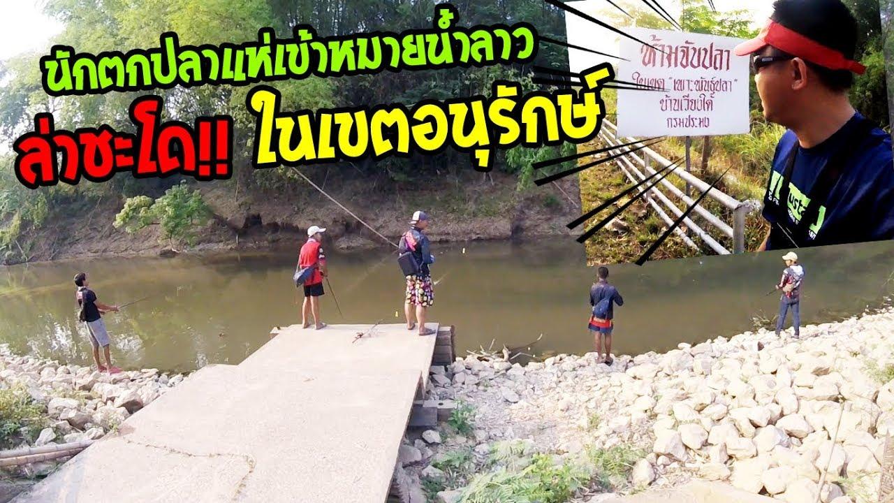 ล่าชะโดเขตอนุรักษ์!! นักตกปลาแห่เข้าหมายตกปลาชะโดแม่น้ำลาว (กำจัดชะโดโหด!!)