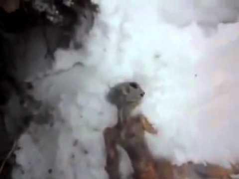 penemuan mayat ELIEN di siberia.flv