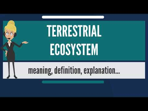 What is TERRESTRIAL ECOSYSTEM? What does TERRESTRIAL ECOSYSTEM mean?