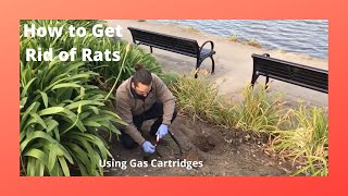 How to Treat Norway Rat Burrows With Smoke Gas Cartridges