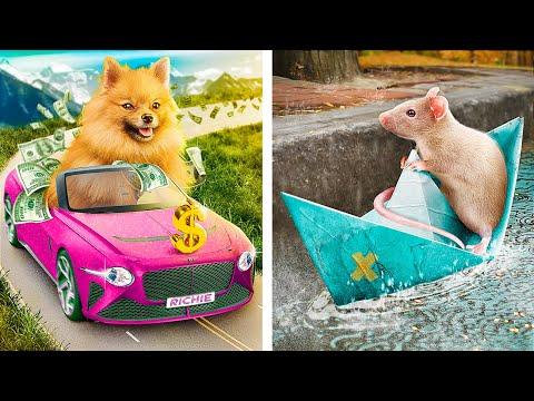 Бедный владелец животного против богатого