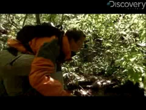 Man vs. Wild - Bloody Trail