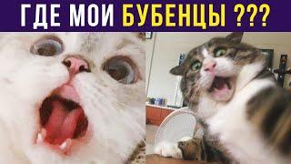 Приколы с котами. ГДЕ МОИ БУБЕНЦЫ??? | Мемозг #334