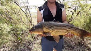 Ловля сазана 9 кг рыбалка ловля карпа Baliq ovi 2020 Arnasoy yangicha korinishda балик ови
