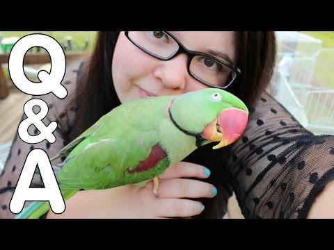 Mizzy's Parrots Q&A