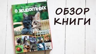 Энциклопедия: Моя большая книга о животных. Обзор детской книги.