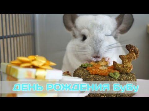 Видео: ДЕНЬ РОЖДЕНИЯ БуБу.