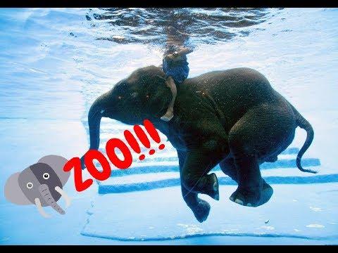 สวนสัตว์ แสนสนุก Trip to Dusit Zoo and Khao Kheow Open Zoo Thailand