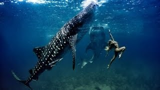 SWIMMING with WHALE SHARKS (PHILIPPINES)