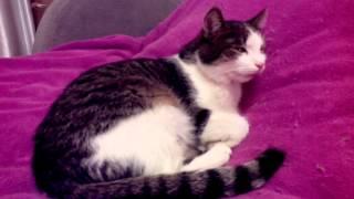 Кот кашляет 1