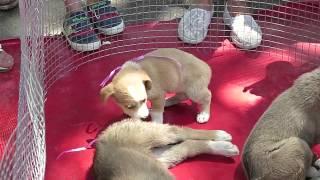 Щенки в дар .Акция приюта для животных.Тбилиси.Зоопарк.