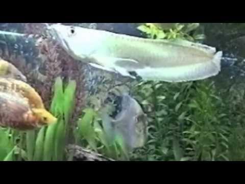 текст песни а я рыба я рыба я рыба. Песня Божья Коровка - А я рыба-я рыба в mp3 256kbps