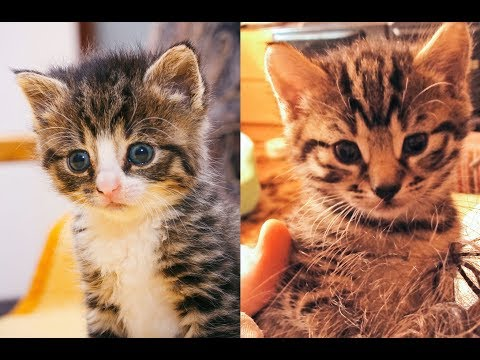 7 Years In 7 Minutes With Two Cats