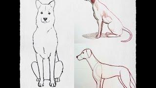 Cómo Dibujar un perro paso a paso PRINCIPIANTE (fácil y rápido)