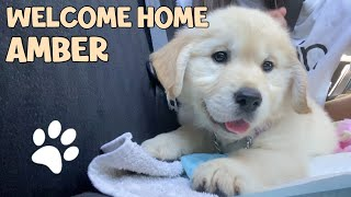 I GOT A GOLDEN RETRIEVER PUPPY | bringing her home
