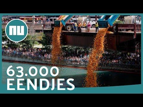 Trucks 'dumpen' 63.000 rubberen eendjes in Chicago River | NU.nl