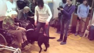 Собаки для Жизни в пансионате Опека Приморский, 26 11 2014
