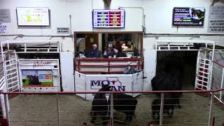 11-19-20 Weaned Steers 542 lbs. @ $156.00 Thank You Wisehart Farms