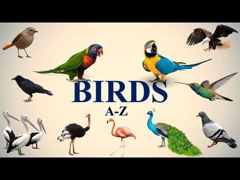 A-Z BIRDS NAMES