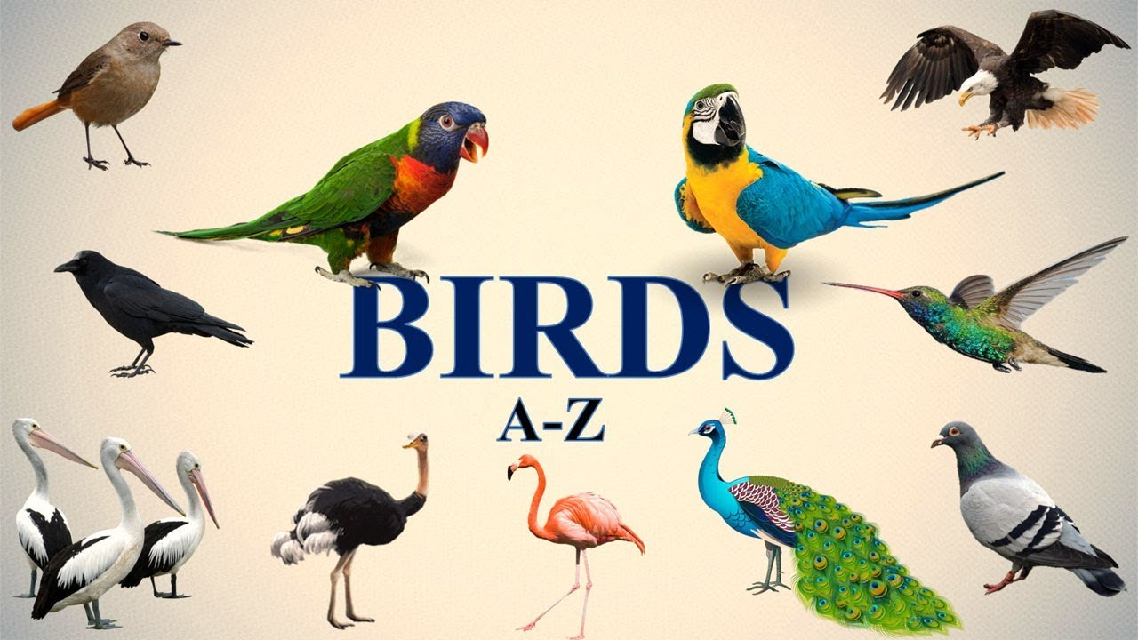5 letter bird names a z birds names 20224
