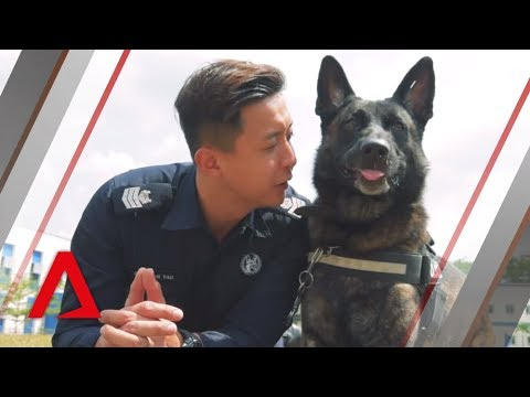 Meet the service dogs of the Singapore Police Force's K-9 unit
