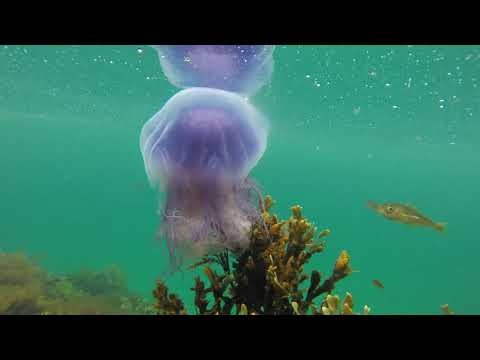Moon and Blue Jellyfish from YouTube · Duration:  1 minutes 52 seconds