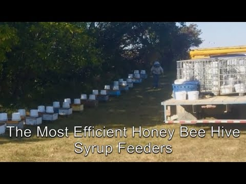 The Best Bee Hive Syrup Feeders