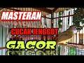 Masteran Cucak Jenggot Gacor  Mp3 - Mp4 Download