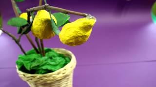 ALTRO CHE CIBO: il limone.
