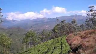 view of tea plantation filled hills around Munnar India II