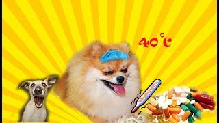 Как Мия вылечила Белку Видео про собак Афера смешное видео про собак