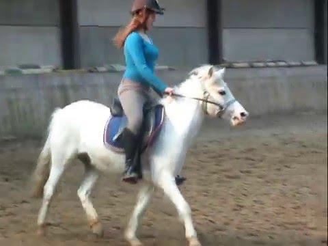 Spiksplinternieuw tekoop mooi welsh pony - YouTube LY-77